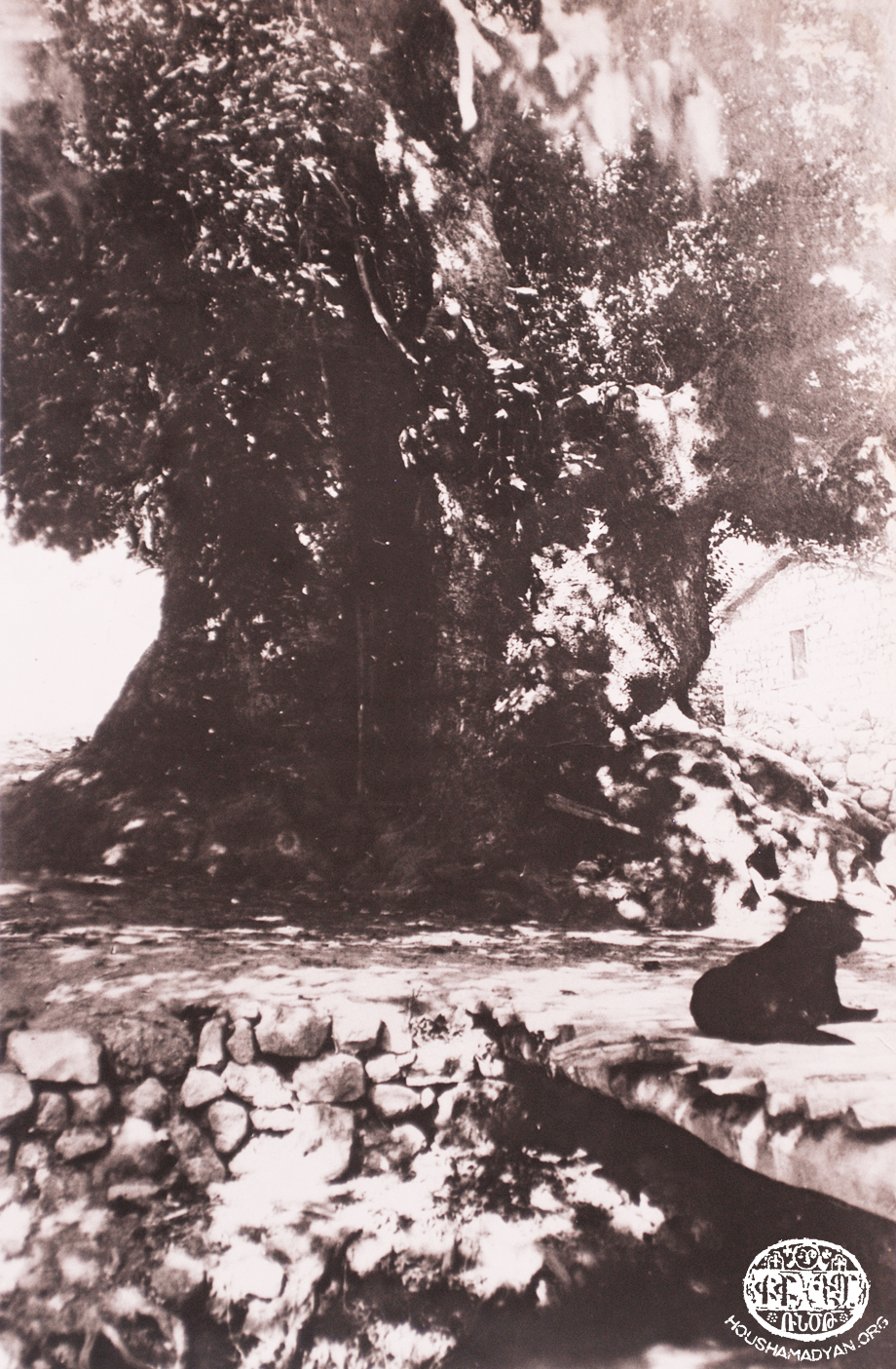 The plane tree of Kheder Beg