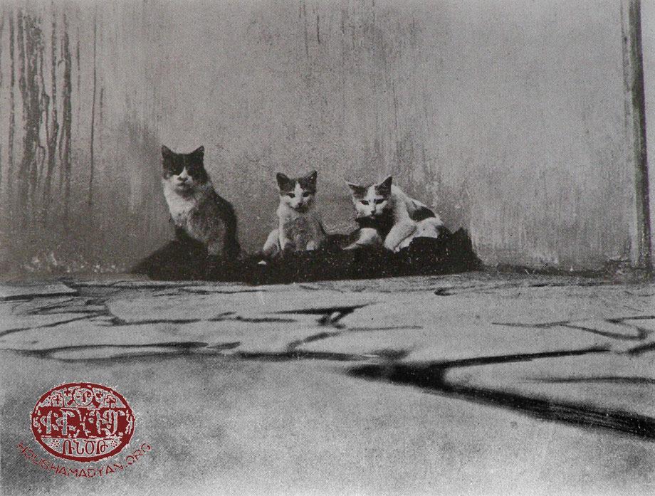 Վանի կատուներ