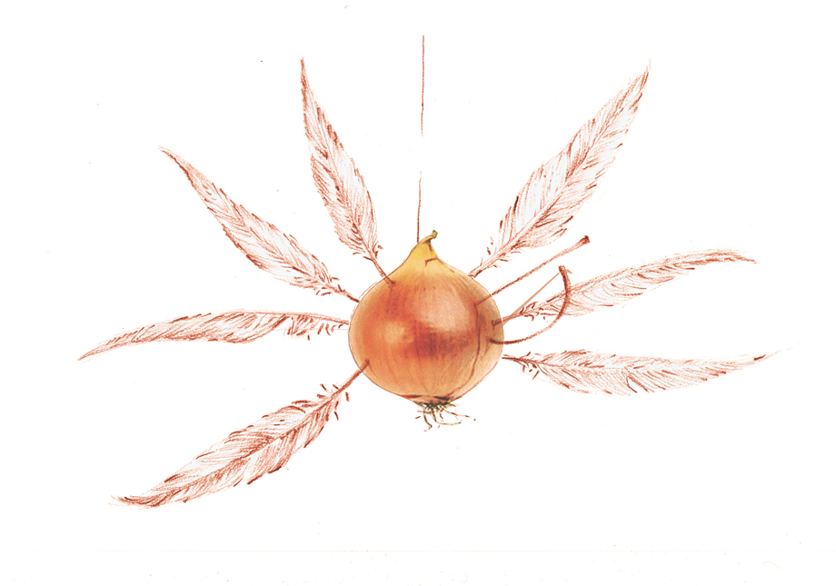 The onion with its seven feathers that is hung from the ceiling during the weeks of Lent