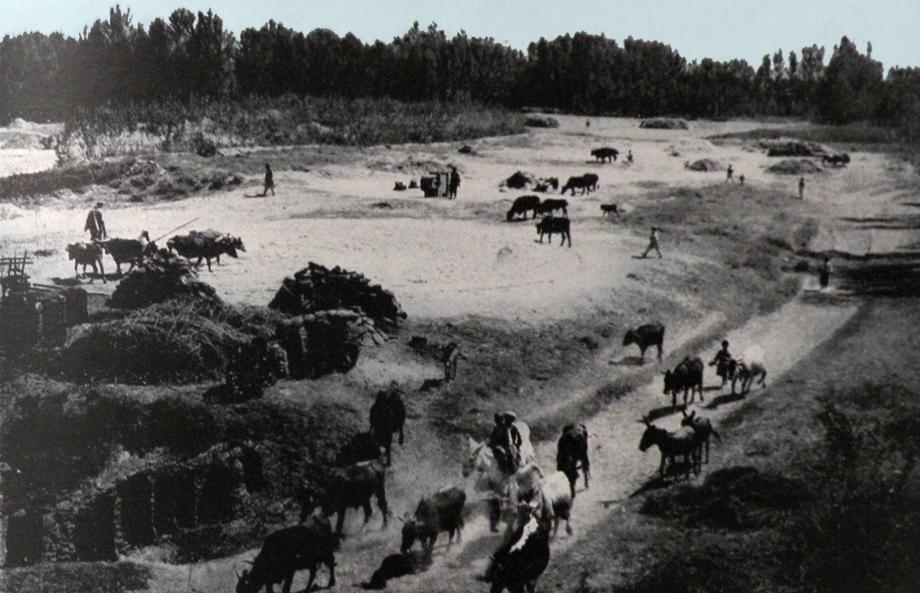 Tılgadin (şimdi Kuyulu) köyünde harman (Kaynak: Vahe Hayg, a.g.e.)